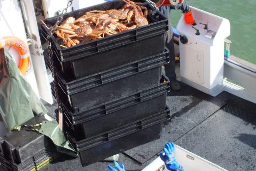 Près de 30 000$ d'amendes pour des pêcheurs gaspésiens